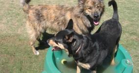 COLUMN: Gargulinski: Hot spot puppy playgrounds