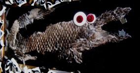 Lizard Skin Art in Mosaic Frame: Genuine Skink Shedding from Lazlo the Lizard