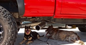 Dehydrating dogs found shade beneath a monster truck in Yuma.