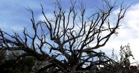 Dead Tree Photo Series: Roosevelt Lake, Arizona
