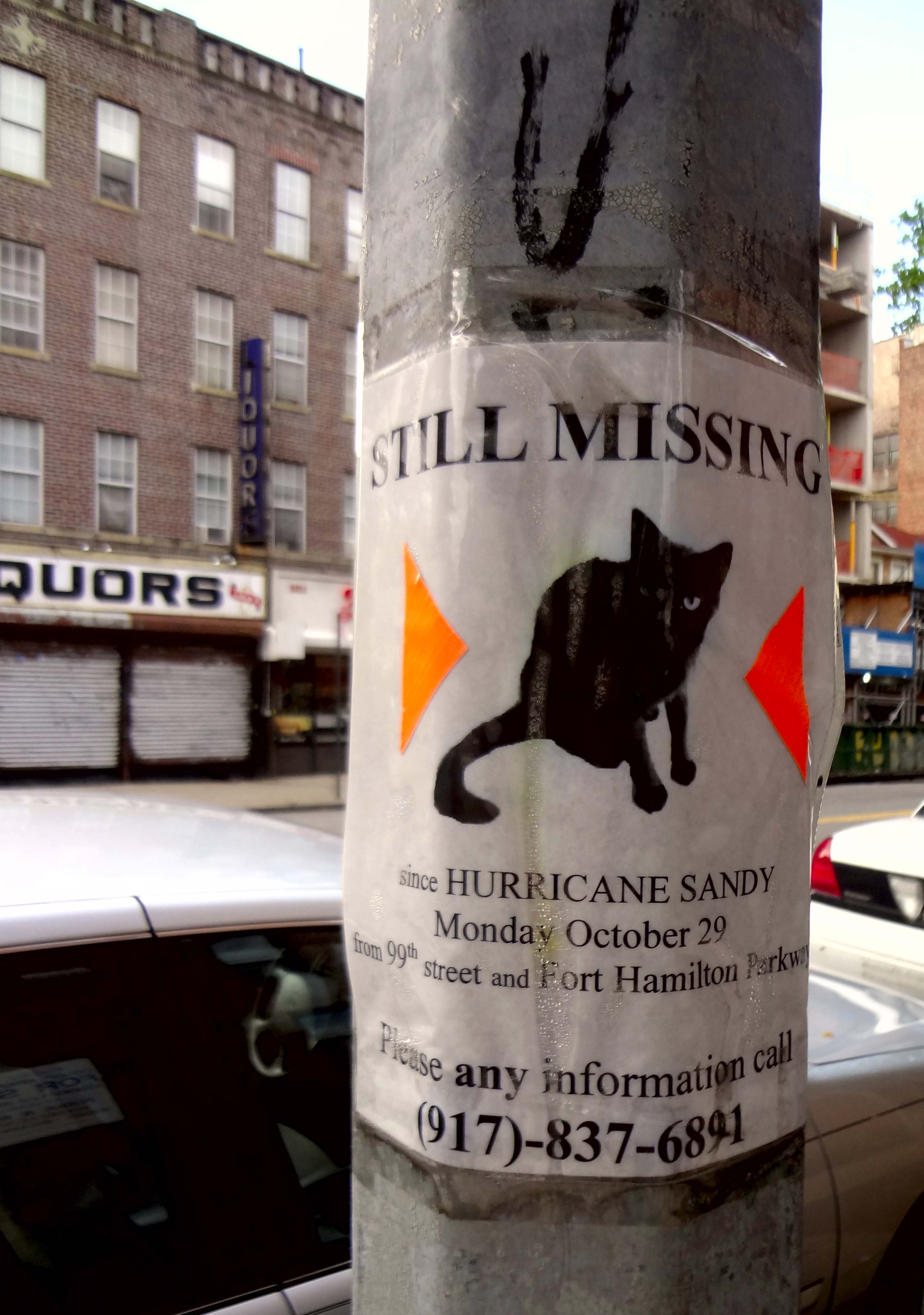 cat-missing
