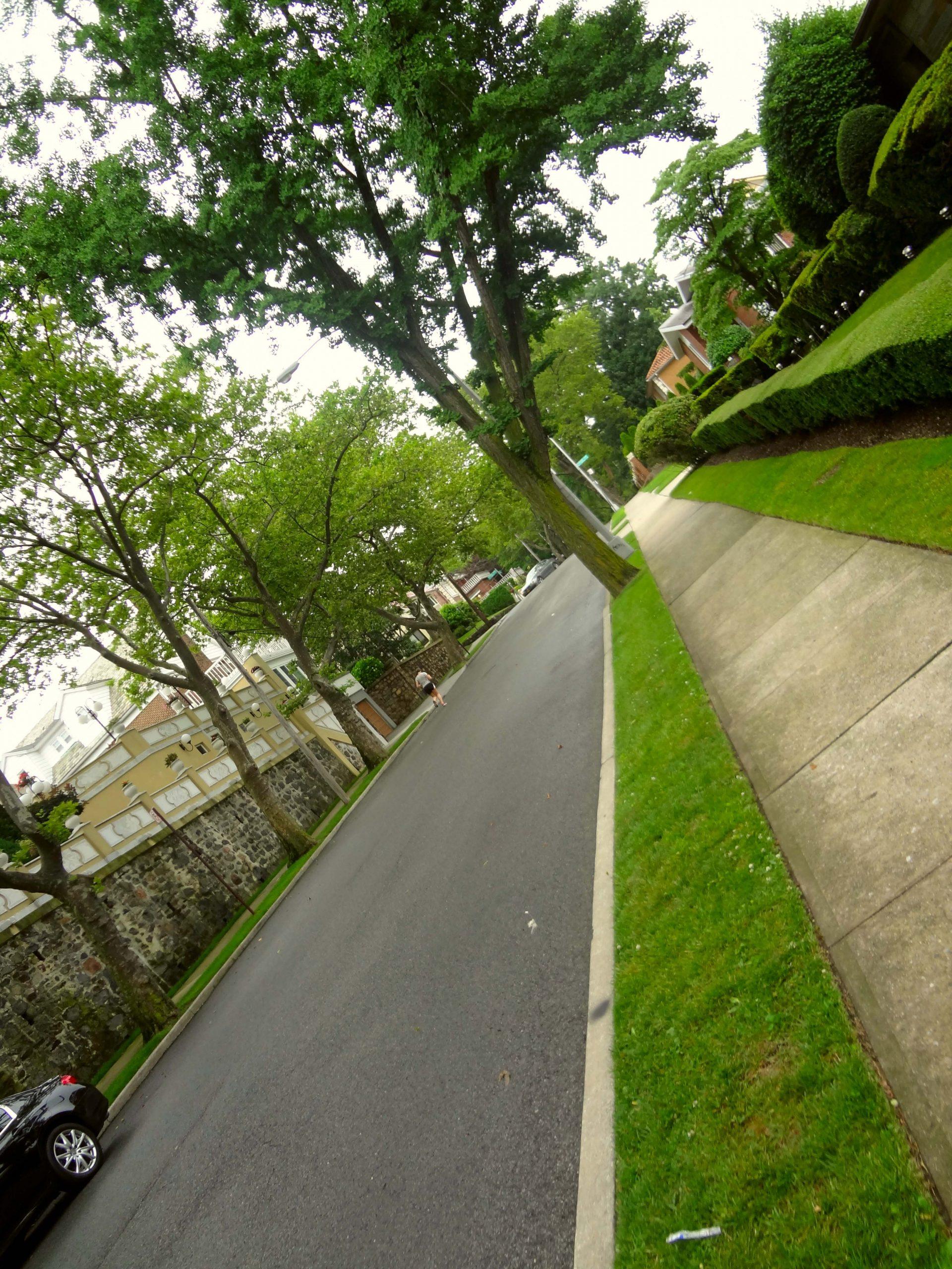 treegrows