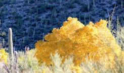 Sabino Canyon Photo Scavenger Hunt