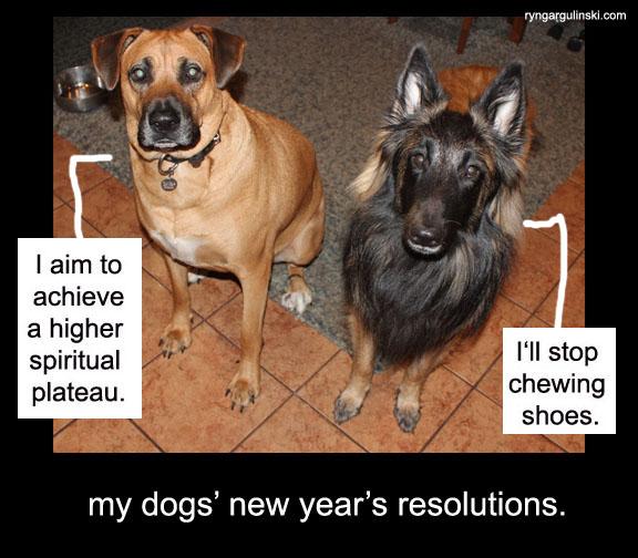 dog new year resolution