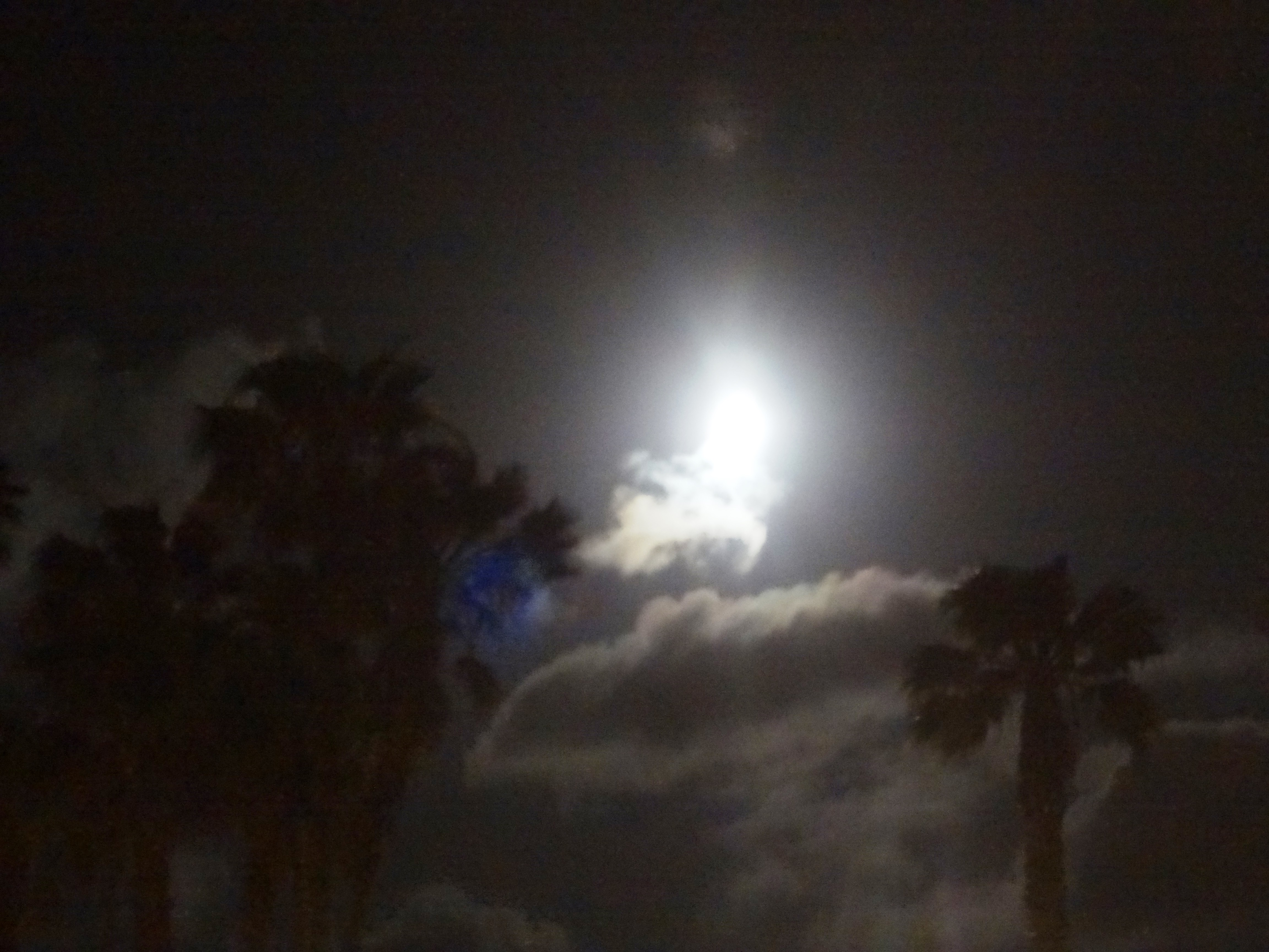 moonlight san diego